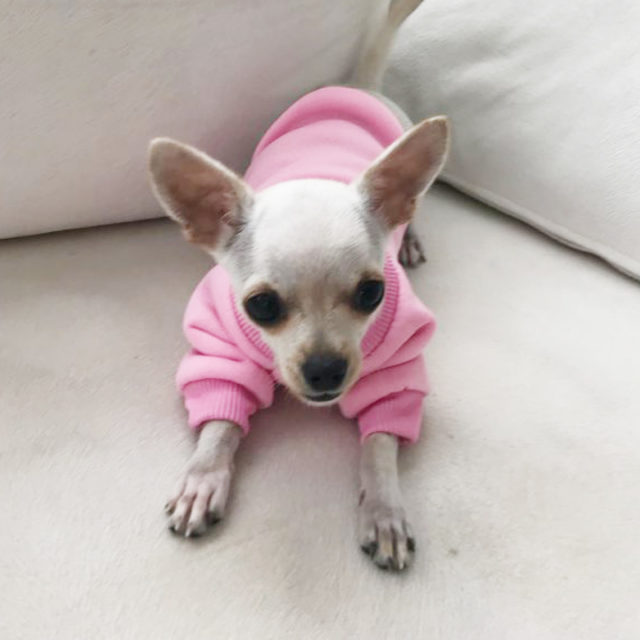 Pets Clothing