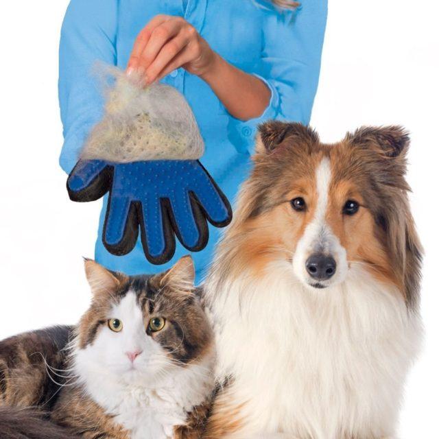Glove For Animal